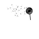 Dandelion, Black And White, Seed