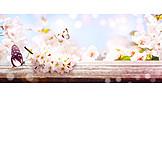 Butterfly, Fruit flower, Springtime
