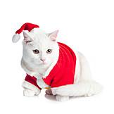 Cat, Santa Claus
