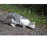 Cat, Lurking