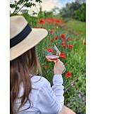 Summer, Beverage, Rose Wine