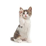 Young Animal, Playful, Cat