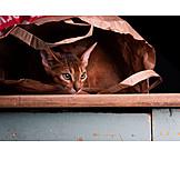 Cat, Hiding, Paper Bag