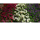 Flowers, Flower Bed