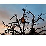 Tree, Nesting Box
