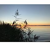 Sunset, Lake, Reed