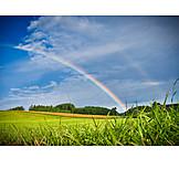 Field, Summer, Rainbow