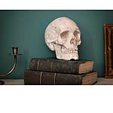 Education, Literature, Still Life