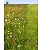 Meadow, Flower Meadow, Mowed