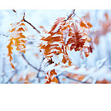 Winter, Twig, Frost