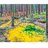 Forest, Sulphur Springs
