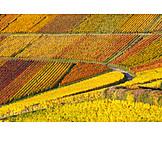 Autumn, Vineyard, Autumn