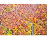 Forest, Autumn, Autumn