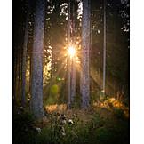 Forest, Sunbeams, Morning Light