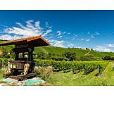 Agriculture, Vineyard, Wine Region