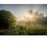 Dawn twilight, Field, Sunbeams, Haze
