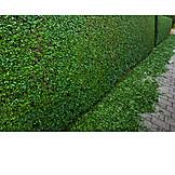 Gardenhedge
