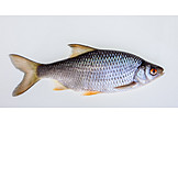 Fish, Fin