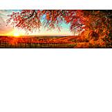 Autumn, Sunset, Vineyard