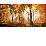 Forest, Autumn, Sunbeams