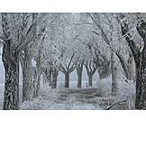 Winter, Tree Alley